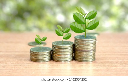 Trees are grow up on coins stack in ascending order and the growth investment with copy space. Concept of finance and investing.