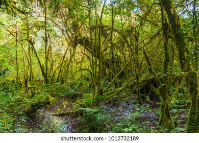 Trees grow in rainforest are consisting of moss, fern and orchid.