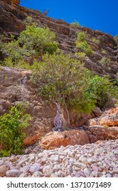Trees growing at cliff of Mandu Mandu Gorge during dry season at Cape Range National Park Australia