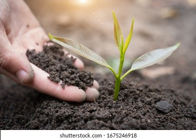 Trees growing from fertile soil and hands are going to use the soil to nourish the trees. Concept of environmental awareness Complete soil, agriculture, preserve global warming by planting trees.