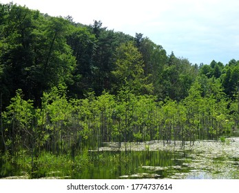 Trees growing inside a lake, Zloty Potok, Krakow-Czestochowa Upland (Jura), Poland