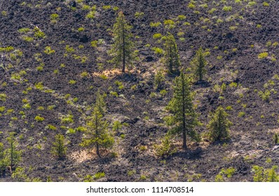 Trees growing in lava flow photographed from the rim of Lava Butte crater near Bend, Oregon. Lava Butte is a cinder cone that erupted about 7000 years ago creating the cinder cone and the lava flow.