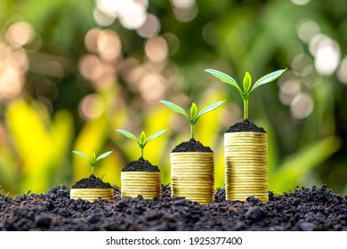 Trees are growing with money and fertile soil as a financial and investment idea.