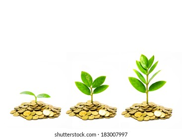 trees growing on coins / csr / sustainable development / trees growing on stack of coins
