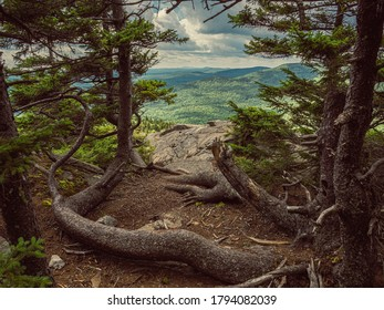 Trees growing on the edge of a cliff on North Pack Monadnock in Greenfield New Hampshire
