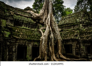 Trees growing out the ruin of Ta Prohm, Angkor Wat.