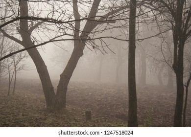 trees growing in the park in autumn season in a small fog. The foliage of a maple fallen to the ground and the dark trunks of plants.