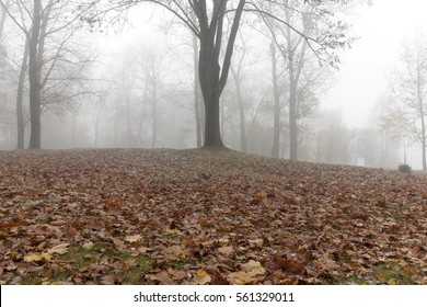 the trees growing in the park in autumn season in a small fog. The foliage of a maple fallen to the ground and the dark trunks of plants.