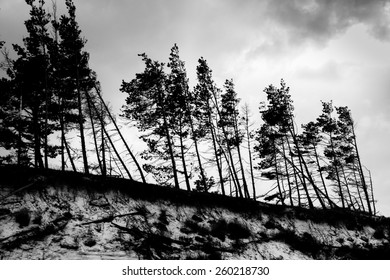 Trees growing at sand dune during windstorm.