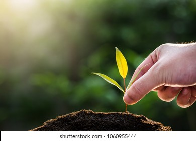 trees growing seedlings in hands. Bokeh green Background Female hand holding tree on ield grass Forest conservation and growing concept
