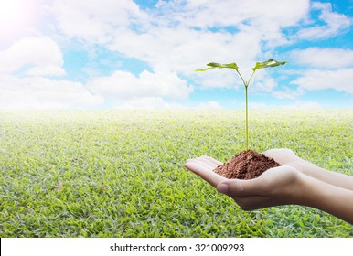Trees in hands with nature abstract background. Ecology concept