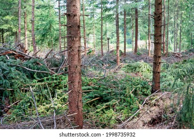 Trees have been cut in the woods, but some left for growing