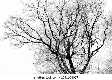 trees with hoarfrost in overcast sky