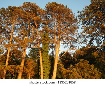 Trees illuminated by later afternoon sunlight