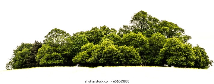 Trees island isolated on white background