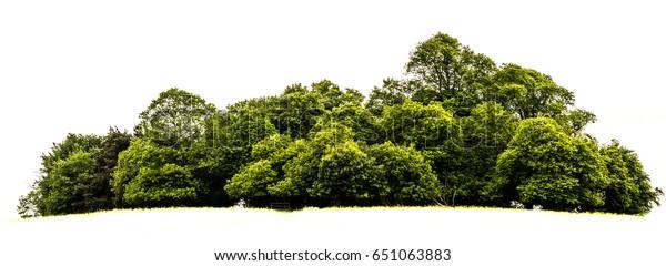 Trees island isolated on white background