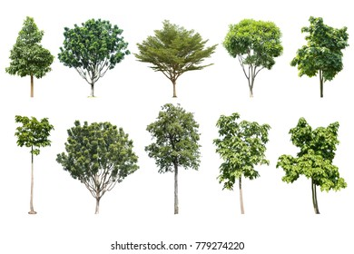 trees isolated collection on white background