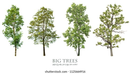 Trees isolated on white background , The collection of trees.