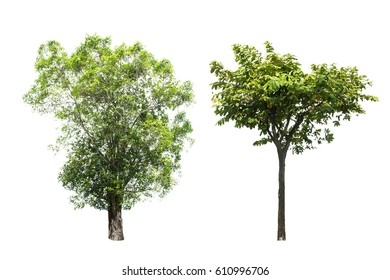Trees isolated on a white background
