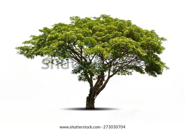 Trees isolated on white background, tropical trees isolated used for design, advertising and architecture