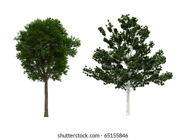trees isolated on white very high resolution