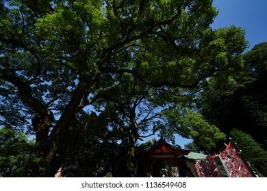 Trees in Kanagawa