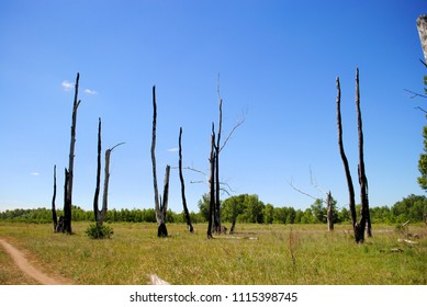 trees killed by lightning