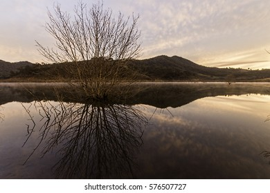 Trees in the Lake and reflections of the trees in the very calm morning, Create wonderful view and serenity for all to enjoyed.