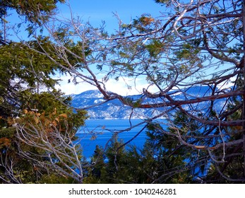 Trees at Lake Tahoe in winter on sunny day