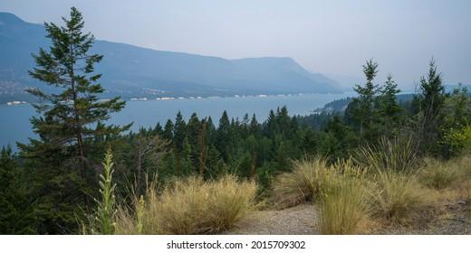 Trees at lakeshore, Edgewater, British Columbia, Canada - Shutterstock ID 2015709302