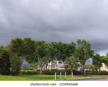 Trees in landscape with stormy clouds