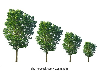Trees from large to small isolated on white background