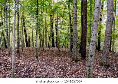 Trees and leaf-covered ground, High Ground Park, Knoxville, Tennessee, USA
