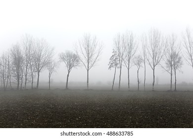 Trees with leafless branches fading into the fog