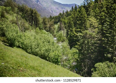 Trees, leafs and forest close to the mountains of Aigues Tortes National Park in Spain.