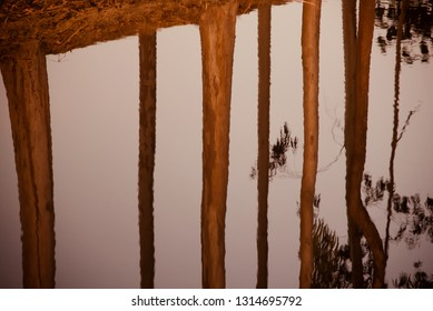 Trees and leaves reflection in water of a pond unique blurry photo