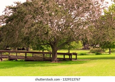 Trees in Leesburg Park