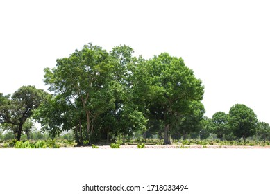 Trees line isolated on a white background