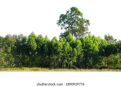 Trees line isolated on a white background.