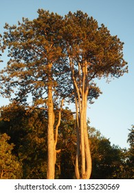 Trees lit by late afternoon light
