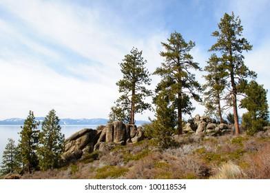 Trees at Logan Shoals Vista in Lake Tahoe, California.