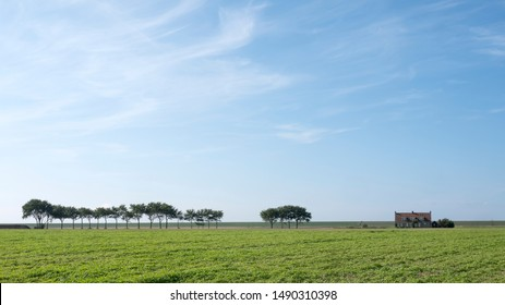 trees and lonely house under blue sky on grassy dyke in dutch province of friesland in the north of the country