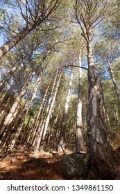 Trees. Los Ports de Beseit. Teruel province. Spain