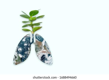 Trees are the lungs of the world.Elements of this image furnished by NASA