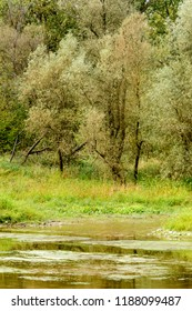 trees and lush vegetation on shore of Ticino river oxbow lake , shot in a bright cloudy fall day  in Ticino park near Bernate, Milan, Lombardy, Italy