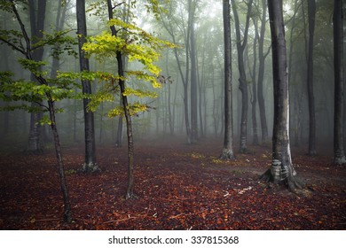 Trees in magical misty forest