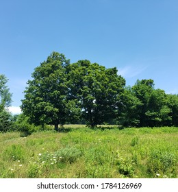 Trees in a meadow, central Massachusetts