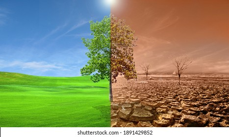 The trees in the meadow on one side are perfect, the other side is dry. Global warming concept