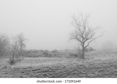 Trees in a meadow, in thick fog, creating an eerie scene. Black and White.