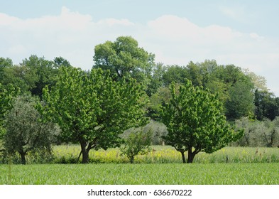 Trees and meadows